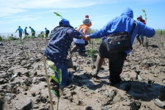 Penanaman-Mangrove-di-Bumi-Dipasena-Lampung-28-30-Maaret-2018-1