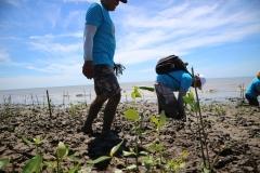 Penanaman-Mangrove-di-Bumi-Dipasena-Lampung-28-30-Maaret-2018-3