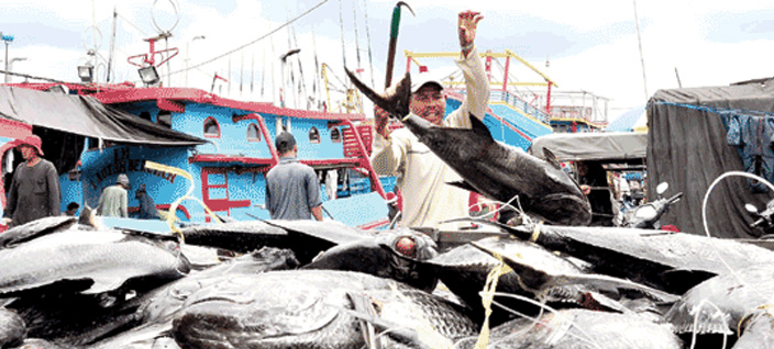 Kiara Desak Diplomasi Maritim Atasi Pencurian Ikan
