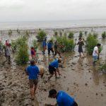Pohon Mangrove Hijaukan Bibir Pantai Timur Lampung