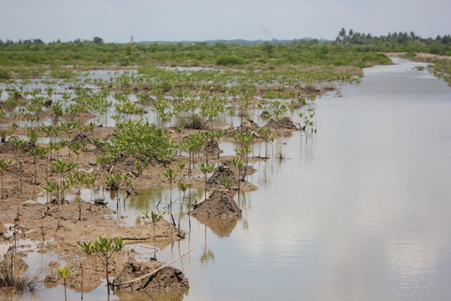 Indonesia: Mangroves for life
