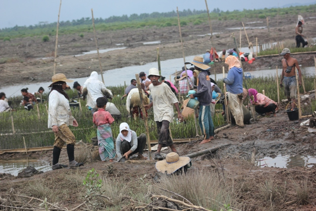 Govt told to support local initiatives in mangrove conservation