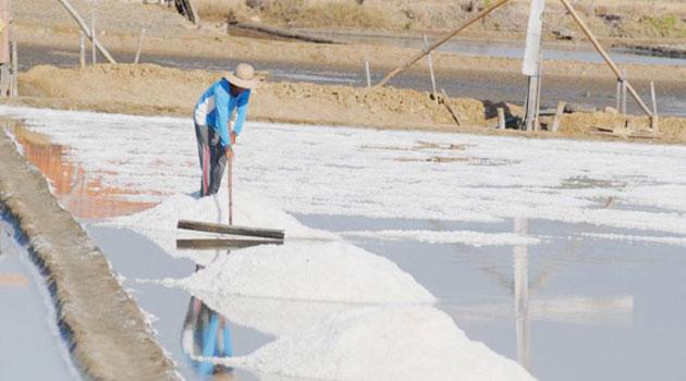 Petambak Minta Impor Garam Dihentikan